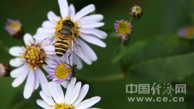 在咖啡中添加蜂蜜 是时尚还是健康选择?